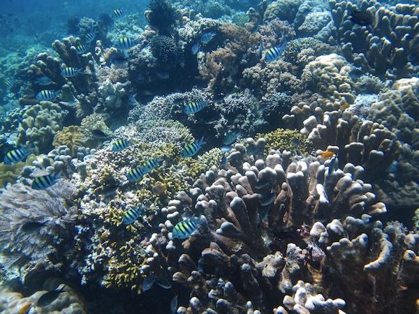 Reef1_034